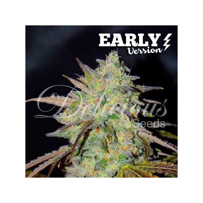 Marmalate Fast Version Feminized (Delicious Seeds)